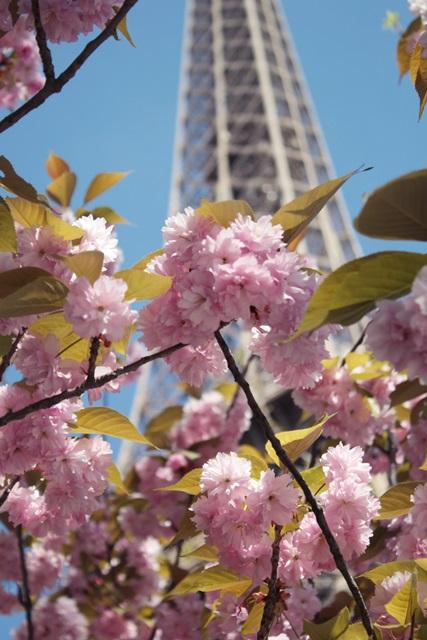 paryz kwiecien wiosna