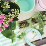 balkon taras aranzacja mieta roz mieta